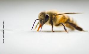 elhalt méhek kezelése pikkelysömörhöz pikkelysömör tünetei kezelést okoznak népi gyógymódok